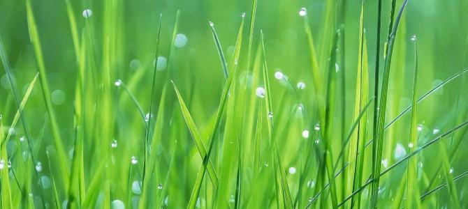 Grün – die sanfte Revolution